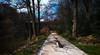 Grugapark Essen (FotoTrenz NRW) Tags: grugapark essen gänse weg see park nature freizeit nrw