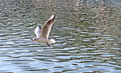 fly (poludziber1) Tags: street sky sea city cityscape capital bird athens greece white nature
