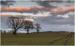 Three In A Row (Steven Peachey) Tags: landscape trees sunset canon5dmarkiv canon ef70200mmf4l leefilters stevenpeachey 5dmarkiv lightroom farmland treescape