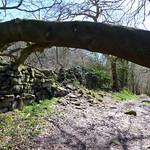 Bow Wood path thumbnail