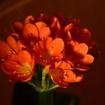DSC_0504 thumbnail