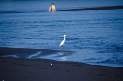 HAA - Hawai (9) (Icono Clasta) Tags: guatemala chiquimulilla hawai beach sunset