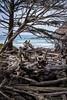 Driftwood View (LadyBMerritt) Tags: driftwood ocean pacific oregon indianbeach