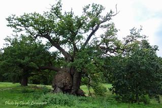 Veterans Trees, Hatfield House Park