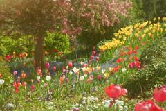 In Love with Color (buffdawgus) Tags: canon5dmarkiii california spring springtime landscape canonef24105mmf4lisusm sierranevadafoothills sanjuanridge lightroom6 topazsw flowergarden anandavillage nevadacounty tulipgarden tulips