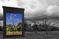 Retazo de primavera (ricardocarmonafdez) Tags: landscape arboles trees nature cuadro frame clouds cielo sky blue monochrome imagination concepto concept spring primavera effect edition processing 60d 1785isusm canon naturaleza