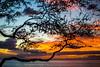 If You Could Read My Mind Love (Thomas Hawk) Tags: america finnestate hawaii makena maui turtlepointestate usa unitedstates unitedstatesofamerica wailea waileaelua sunset kihei us fav10 fav25 fav50 fav100