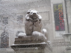 2018 Late March Blizzard Snow Lions 8531 (Brechtbug) Tags: 2018 late march blizzard snow lions new york public library lion braving elements 42nd street 5th avenue nyc 03212018 storm snowing snowstorm blizzards winter weather animal cat feline statue sculpture art cats