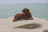 305 - El colega y la pietra de la Scala dei Turchi (dreyphotos) Tags: perro dog can cane pietra scala dei turchi sicily sicilia agrigento italia italy friend amigo