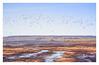 Contrails (PhotoKaton) Tags: birds cranes hornborgasjön lake water colors sweden