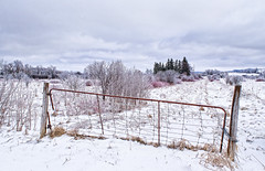 Along The Lane (cindiefearnall) Tags: winter landscape icestorm greycounty pastoral rural countryroad frozen farmland fence farmgate ontario moody