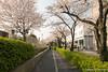 Tabata, Tokyo (takashi_matsumura) Tags: tabata kitaku tokyo japan nikon d5300 sakura cherry blossoms afp dx nikkor 1020mm f4556g vr