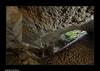Guy dans la Glacière des Granges du Roi - Pierrefontaine-les-Varans (francky25) Tags: guy dans la glacière des granges du roi pierrefontainelesvarans franchecomté doubs grotte karst