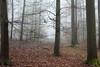 Walkway (Wellandok) Tags: forest wood spring trees fog mist