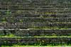 Roman Theatre, Fiesole (Anita Pravits) Tags: antike fiesole firenze florence florenz italia italien italy romantheatre toscana toskana tuscany ancienttimes römischestheater teatroromano