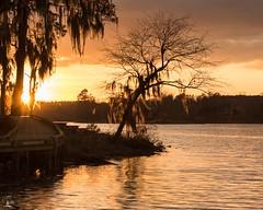 Golden Hour (Nizmo6) Tags: river savannahriver sunset spanishmoss moss goldenhour light lighting ndfilter nikon d810 nikond810