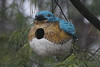 Ceramic Blue Bird (hank278) Tags: ceramic bluebird backyard photoaday pad tree