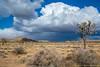 Joshua Tree National Park (simone_a13) Tags: usa unitedstates california jtnp joshuatreenationalpark desert highdesert landscape tree cloud weather sky