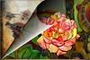 Rose for my love (PaulO Classic. ©) Tags: deepdream picmonkey canon eos450d rose gimp tas