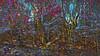 20180402_163720_o (wos---art) Tags: bildschichten wald sträucher bäume äste fusweg wildwuchs natur natürlich gewachsen