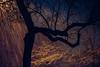 Heavy Snow (Corey Dav!s) Tags: nikon night longexposure snow trails tree silhouette coreydavis coreydavisphotography cdphoto nature light