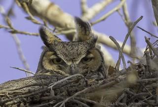 The Mom Stare