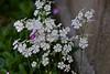 DSC01368 (Kotaro_Nakagawa) Tags: sony ilce6000 mhexanon90mmf28 konica flower