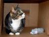 Boo 1 (hollyzade) Tags: animal animals pet domesticated cat cats eyes neutral cute ears chat katze gato neko bili nikon d40 nikond40