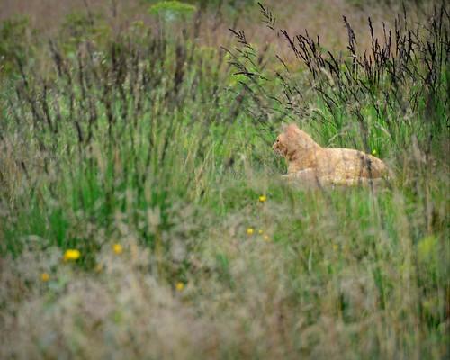 Tracking cats I