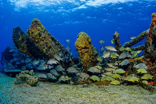 Bahamas corals