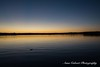 Sunrise on the Lake, Canberra (Anna Calvert Photography) Tags: australia canberra lakeburleygriffin landscape outdoors scenery sunrise kingston foreshore reflection water duck