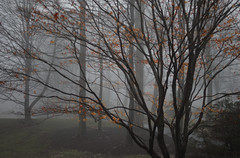 A foggy day (Violet aka vbd) Tags: pentax k3 vbd hdpentaxda55300mmf4563edplmwrre ct connecticut tree newengland fog foggy branches leaves trumbull landscape 2018 winter2018 handheld manualfocus vista