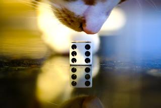 Cat's Dice