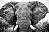 Shattered Elephant (Yasiiii) Tags: everyone for group groupforeveryone elephants nature manipulation photoshop antlers africa wrinkles geoemtry design art