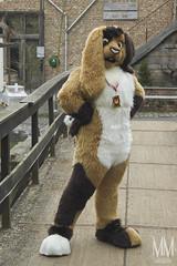 _DSC0066 (MM Furry Photo) Tags: bunny rabbit fursuit fursuiting portrait critterfactory pantoffel