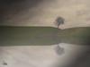 Mirage (Ukelens) Tags: ukelens bern schweiz swiss switzerland suisse svizzera tree baum mirage reflection reflextion photoshop lightroom fog nebel nature natur light lights lighteffects licht lighteffect lichter lichteffekt lichteffekte lightshow manipulation gras