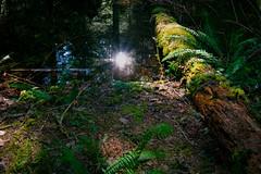 log-reflection (jschust86) Tags: water reflect reflection moss log