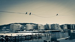 Birds on a string (lindsipindsi_) Tags: lovebirds sørenga norway oslo bw streetphotography bird sky city building water