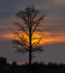 Tuseday nights sunset.... (Kevin Povenz Thanks for all the views and comments) Tags: 2018 march kevinpovenz westmichigan michigan ottawa ottawacounty ottawacountyparks grandravinesnorth sunset tree silhouette sun clouds canon7dmarkii sigma yellow orange evening dusk nightfall