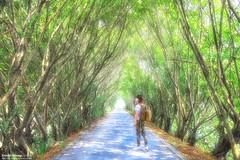 隧道 (Estrella Chuang 心星) Tags: 心星 estrella tree 隧道 tunnel