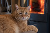 Hell Ain't A Bad Place To Be (sdupimages) Tags: chat cat bokeh fire feu dof animal felin feline portrait fun funny