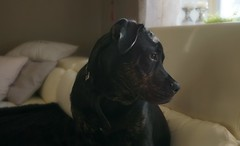 Weekend visitor (ann-k b) Tags: dog animal sonya6000 mirrorless canine pet