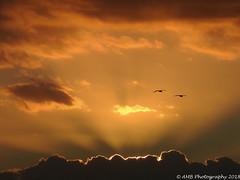 Peaceful Sunset (Alloa2013) Tags: birds canaryislands hardrock holidays sunset tenerife adeje canarias spain nikon coolpix p900 playaparaiso clouds