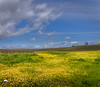 Spring Time (allentimothy1947) Tags: calfiornia cashecreeknaturepreserve nature woodland yolocounty flowers trees vineyards wetlands yellow vines daisy sky clouds pretty beautiful grass green blue