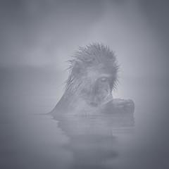 Monkey see monkey do (小川 Ogawasan) Tags: japan japon culture tradition ogawasan