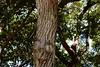 Exciting trees at Kaumahina State Park : 'Valley Isle Excursions' –the incredible Maui tour to Hana…and Haleakalā. (biswarupsarkar72) Tags: hawaii pacificocean pacificislands pacificseabeaches maui usa tourisminusa travellinginusa sea seabeaches wailea grandwailea nikon nikond7000 samsung samsungmobilephotography samsungmobileon7pictures nikonphotography islandsinpacificocean passionoftravellinginusa photojournalism biswarupsarkar biswarupsphotography biswarupsphotographicjourney islandsofhawaii toursinhawaii tourisminhawaii charmsofhawaii natureofhawaii travellinginhawaii experienceinhawaii pacific pacificbeauty enchantinghawaii valleyisleexcursion haleakalanationalpark hana