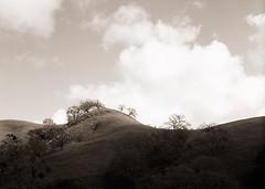 the little hill (stormiticus) Tags: film 6x9 fuji edunneave gsw690iii kodak tmy2 xtol