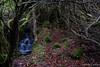 Letterdyfe Garden (Nelleke C) Tags: 2017 letterdyfehouse roundstone connemara countygalway garden holiday ierland ireland tuin vakantie waterfall waterval