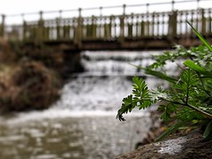 [NT] Hardwick Hall Country Park. Derbyshire. April 2018 (SimonHX100v) Tags: hardwickhall hardwickhallcountrypark nationaltrust countrypark nature mothernature perspective pointofview lowpov pov depthoffield dof hardwickpark derbyshire derby arch bridge bowstring architecture building roadbridge footbridge water whitewater spring2018 outdoor outdoors outside macro macrophotography macros closeup closeupshot closeupphoto closeupphotography bokeh zoom makro macrox macrocaptures macrophoto macroworld