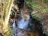 Bach unter Nadelbäumen (Sophia-Fatima) Tags: walsrode niedersachsen deutschland bach brook